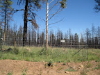 Paseo del Lobo Section 40: Aspen regeneration enclosure after the Schultz Fire (Photo by E. Nelson)