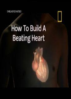 Download - Coração Artificial