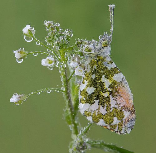Moth in 50 Howling Examples of Dew Photography