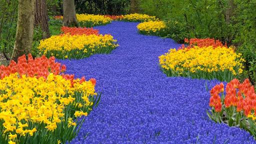 Flowers at Keukenhof Garden, Lisse, Netherlands.jpg
