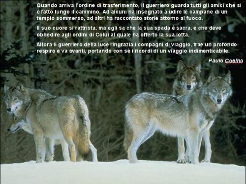 Extrêmement Il lupo e il cane – Wolfghost DF91