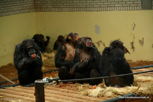 Burgers' Zoo in Arnhem 04-01-1012 (23).JPG