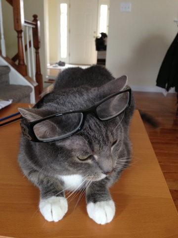 reading glasses kitty