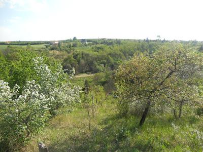 Wanne-be forest-garden