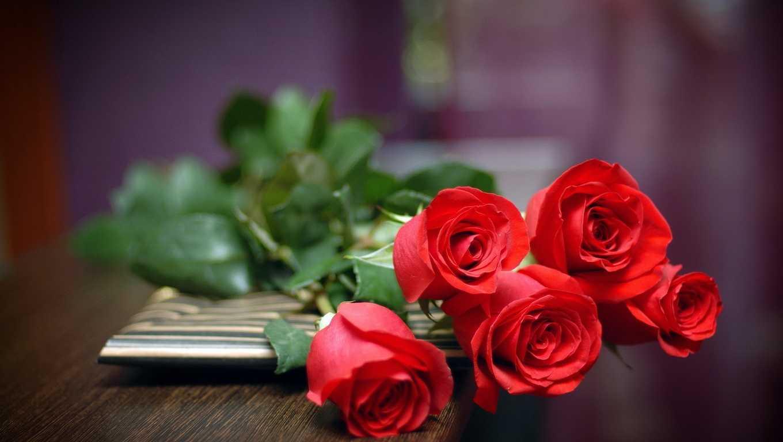 Bộ ảnh Hoa Hồng Nhung đẹp nhất