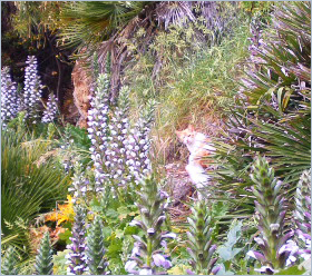 Bagheria Sizilien - Die typische Vegetation