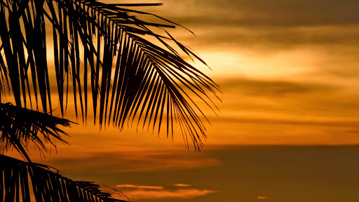 Tropical Palm at Sunset.jpg