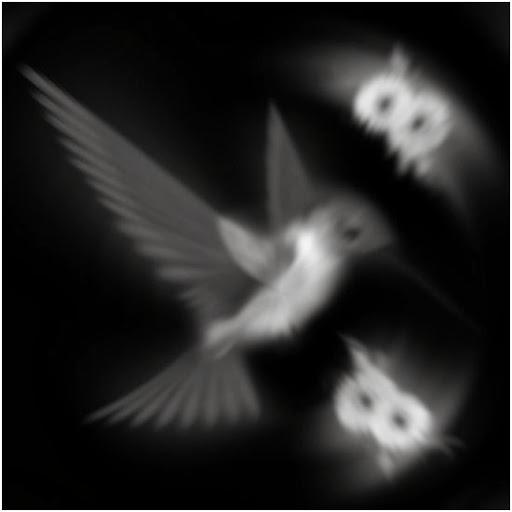 1916hz (3).jpg