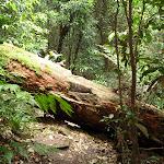 Fallen Tree on Barniers Road (359987)
