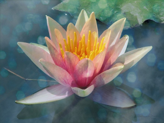 Mind Body Spirit Odyssey The Rose Lily And Lotus A Sacred Trinity
