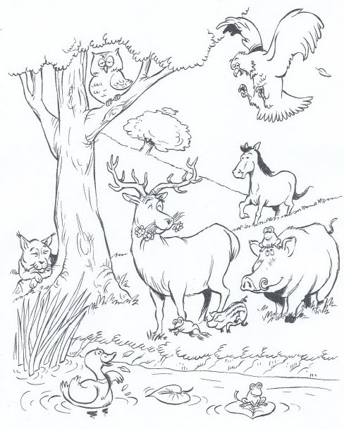 Biodiversity coloring pages
