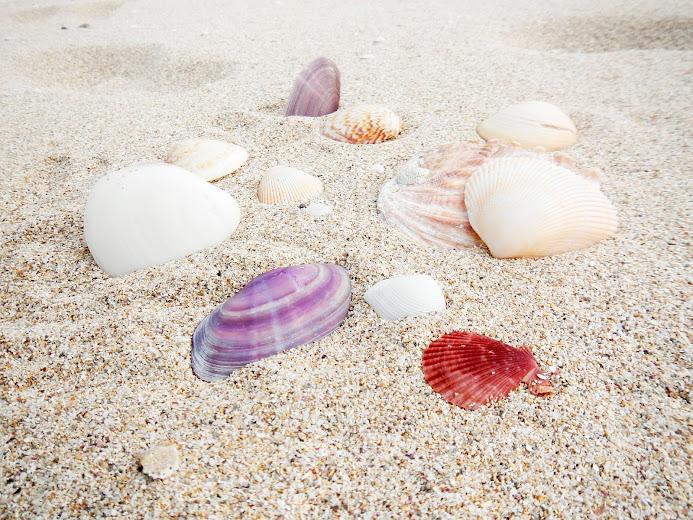 大島海水浴場の貝殻