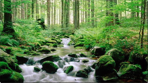 Bayerischer Wald National Park, Germany.jpg