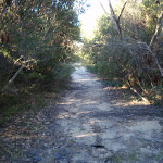 Dense heath along the Salvation Loop track (155104)