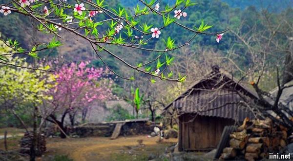thơ mùa xuân về hay