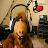 TREVIÑO KG4UHV avatar image