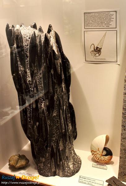 Muzeum Minerałów w Świętej Katarzynie - skamieniały łodzik