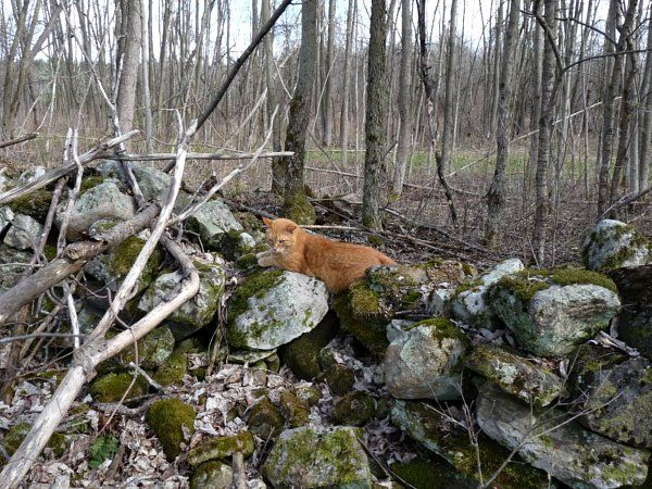 cat resting on a stone wall