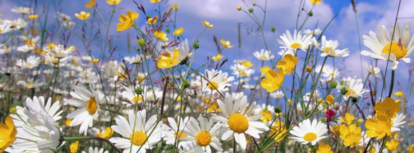 Ảnh bìa hoa dại đẹp