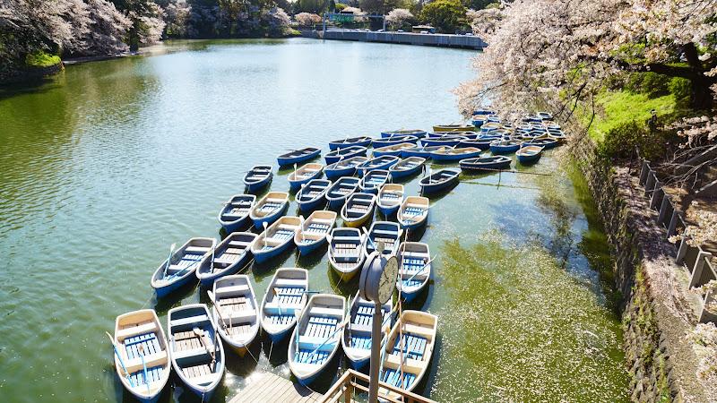 千鳥ヶ淵 桜 写真4