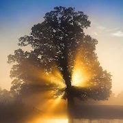 К чему видеть солнце во сне?