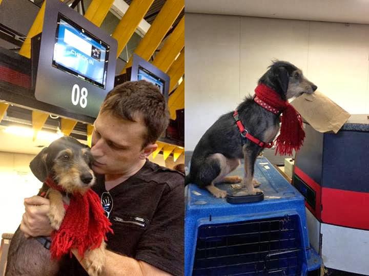 entrevista estopinha viagem cachorro