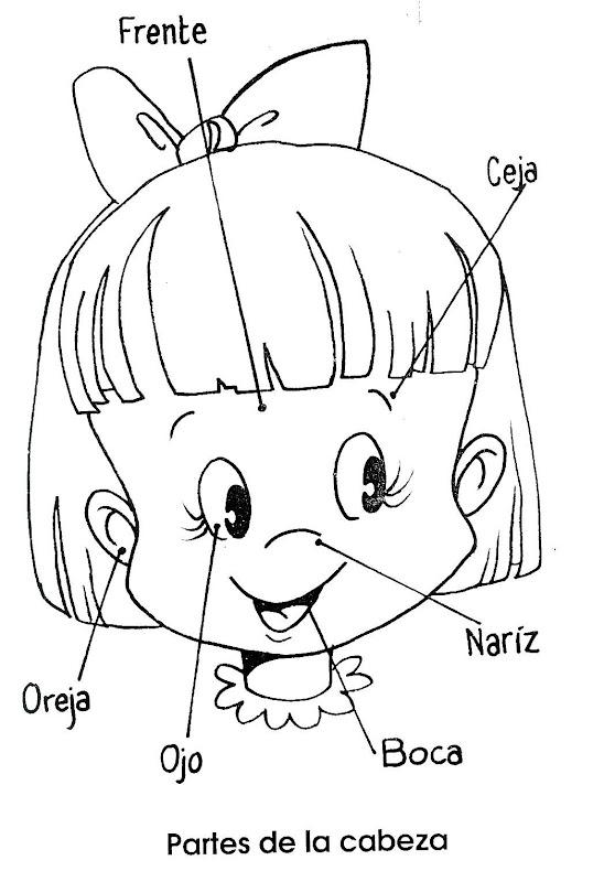 La cabeza y sus partes para colorear - Imagui
