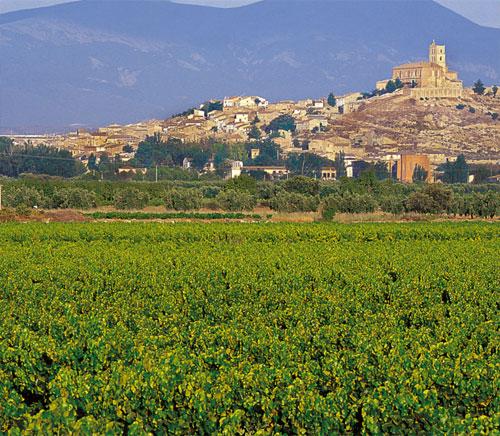 Viñedos de uva garnacha en el Campo de Borja