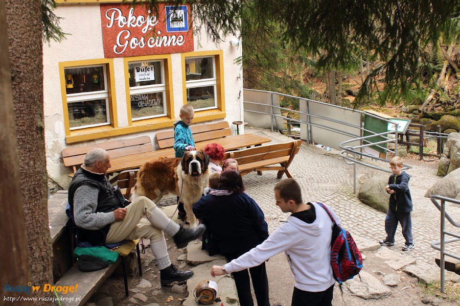 Szklarska Poręba - zdjęcie z psem bernardynem