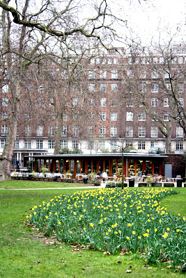 Daffodils in Russell Square in London