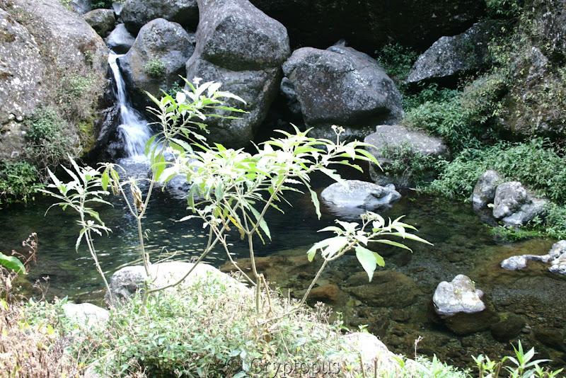 Orchidées in situ, sur l'ile de la Réunion IMG_2215