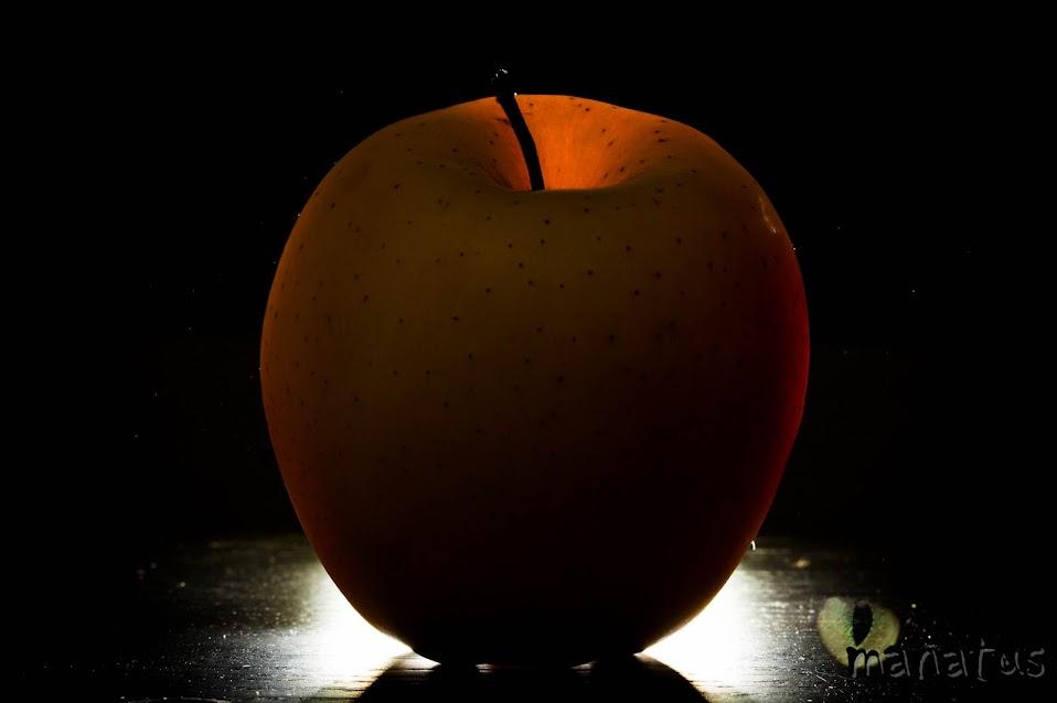 manatus foto blog manzana