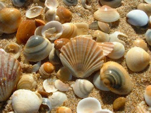 The Magic Of Sea Shells