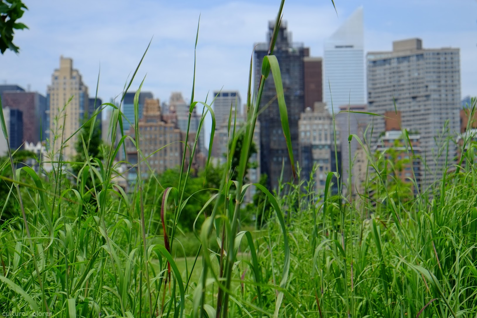 Southpoint Park Roosevelt Island