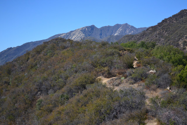 trail along Kennedy Ridge