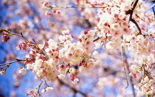 Afbeeldingsresultaat voor lente bloesem foto