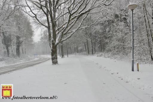 eerste sneeuwval in overloon 07-12-2012  (32).JPG