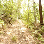 Steep track in the Watagans (321542)