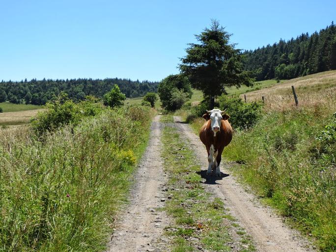 [CR] Dinotrip en mode DUL, grande traversée des Monts d'Ardèche IMG_0408