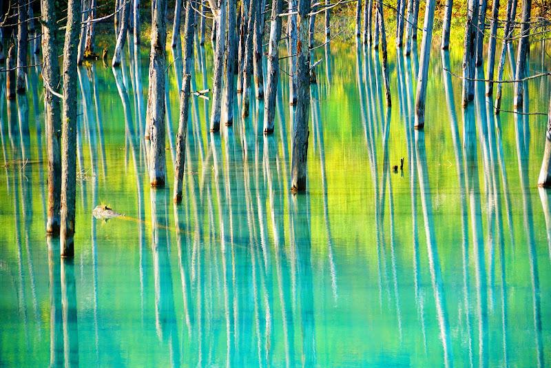 美瑛 青い池 写真8