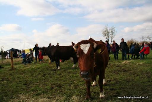 nk Maasheggenvlechten Oeffelt 11-03-2012 (33).JPG
