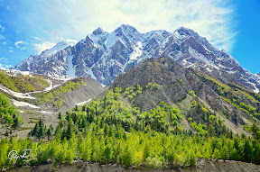 Upper Naltar Valley (Dumain), Gilgit Baltistan, Pakistan