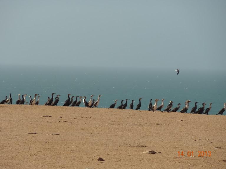 Marrocos e Mauritãnia a Queimar Pneu e Gasolina - Página 5 DSC05835