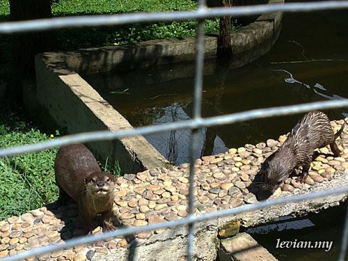 Otters (SE Vivaz)