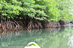 Exploring the mangrove with a canoe