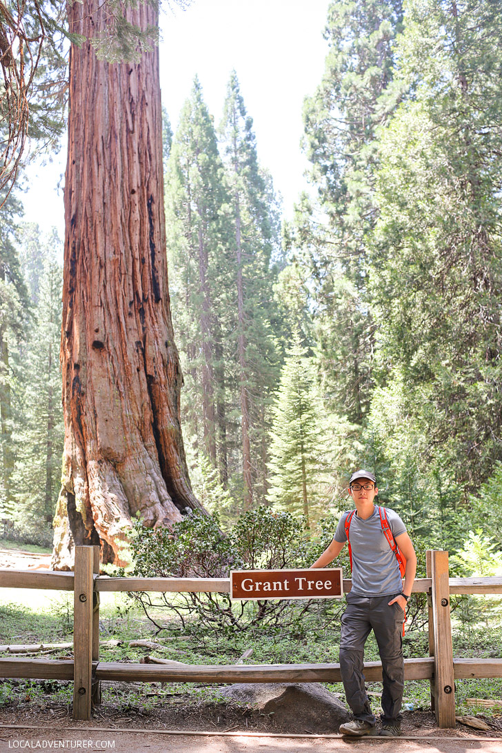 General Grant Tree Kings Canyon National Park (11 Most Amazing Trees to Put On Your Bucket List).