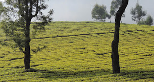 Bangalore Mysore Ooty Tour Packages by Car