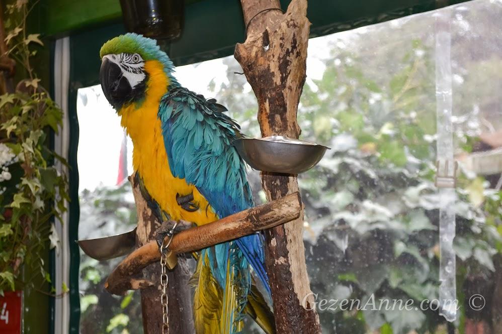 Polina'nın papağanı Cabbar