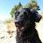 Roxy Reso avatar image
