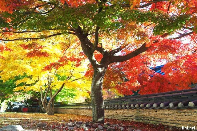 Mùa Thu rực rỡ sắc màu